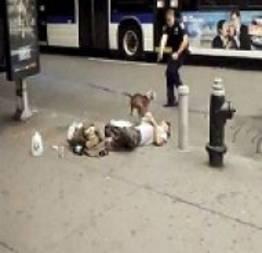 Vídeo em que Pit Bull leva tiro de policial em avenida de Nova York é divulgado