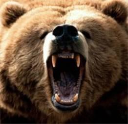 Ataque de um urso pardo a um homem, mordidas mortais