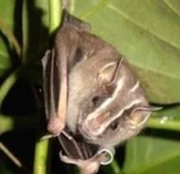 Morcego entra em estúdio de telejornal e causa alvoroço
