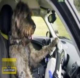 Autoescola para cachorros