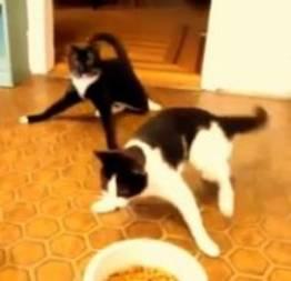 Quem foi que deu pinga para os gatos?