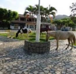 Cavalos pastando em praça pública livremente