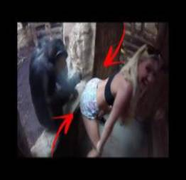 Loirinha provocando o chimpanze na dancinha