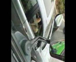 Caiu na net ninfeta batendo siririca no carro
